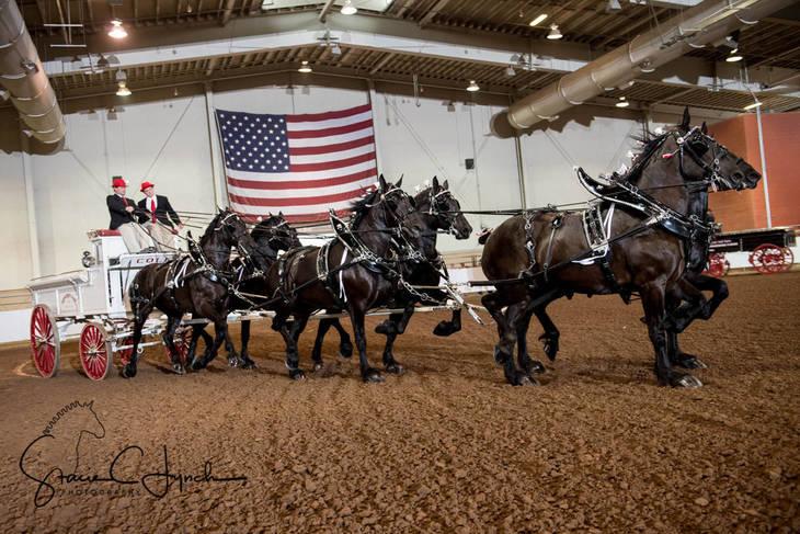 bc9c8a0e35e7b0804f84_Keystone_International_Draft_Horses179.JPG