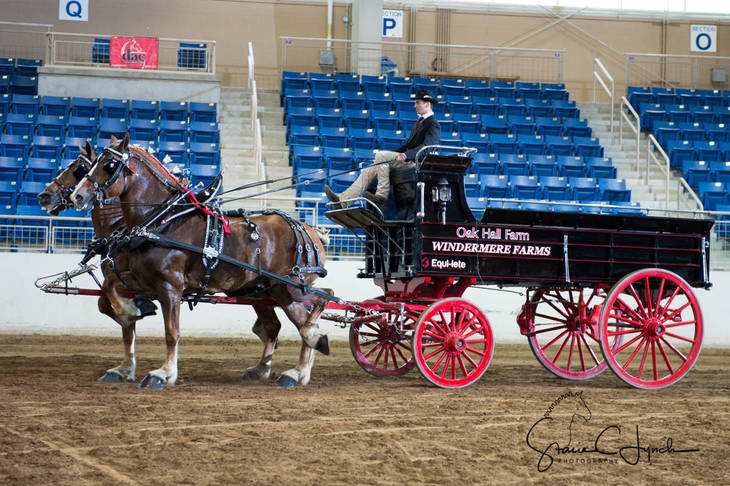 bd03e95597db67fbb5c4_Keystone_International_Draft_Horses181.JPG
