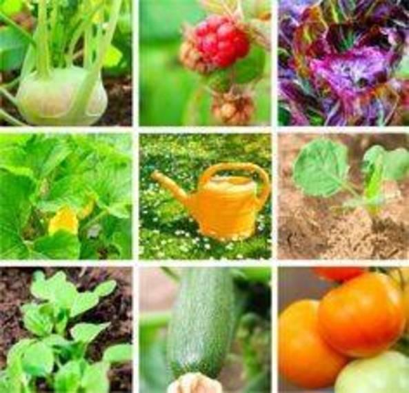 bd310ae6a602bb783505_260cf5015b92aa7900b559e0cf382ebc--vegetable-curry-vegetable-garden.jpg