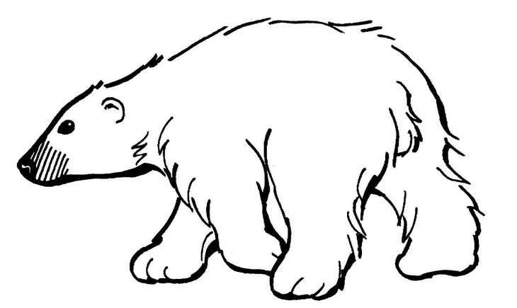be63e33ddd48039a90ef_polar_bear.jpg