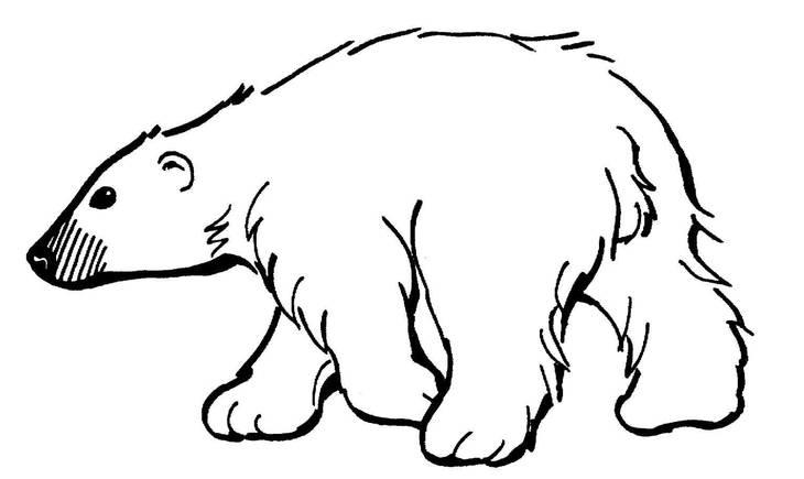 be63e33ddd48039a90ef_polar_bear.jpg