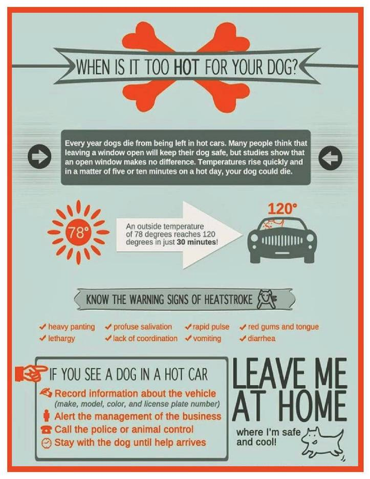 Keep Pets Cool and Safe During the Dog Days of Summer