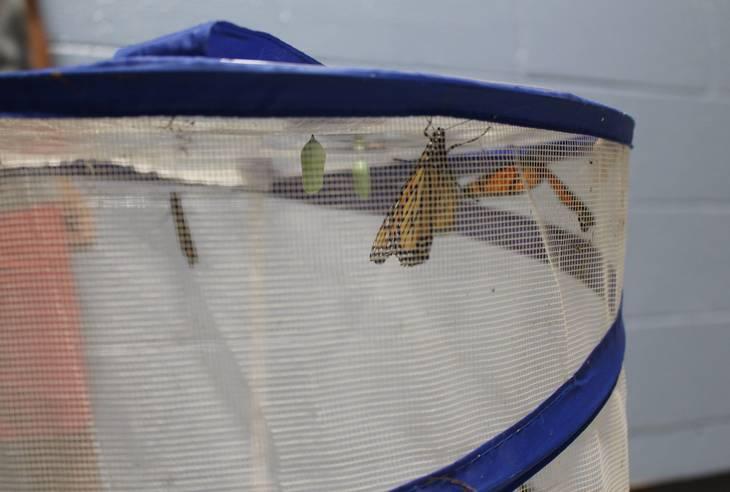 c4db51a94807aba056d2_Butterfly.1.JPG
