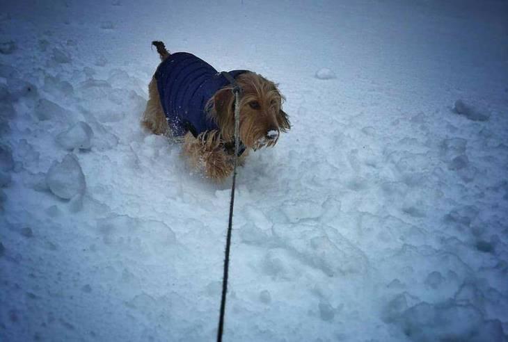 c511dcf61fa000dd8baf_snowy_dog.jpg