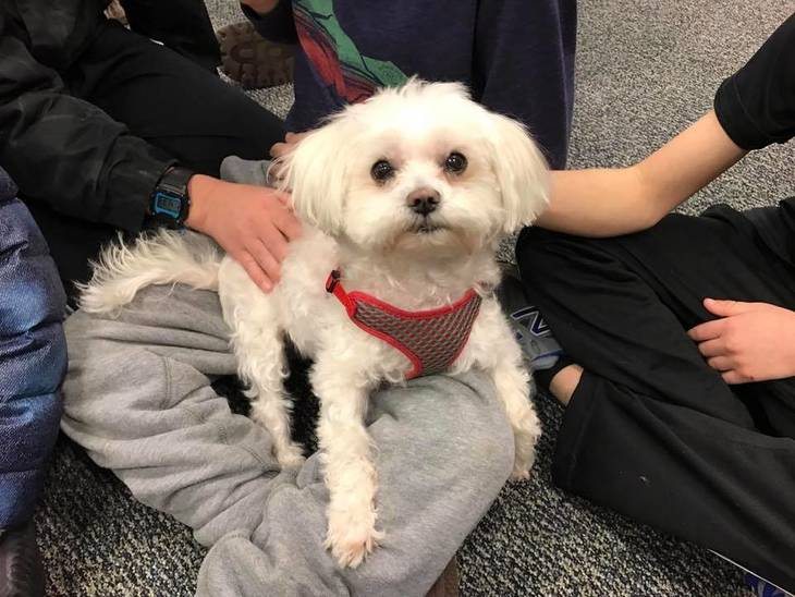 c955dcbbfddc369bff81_Read_Aloud_to_Therapy_Dogs-Brie1.JPG