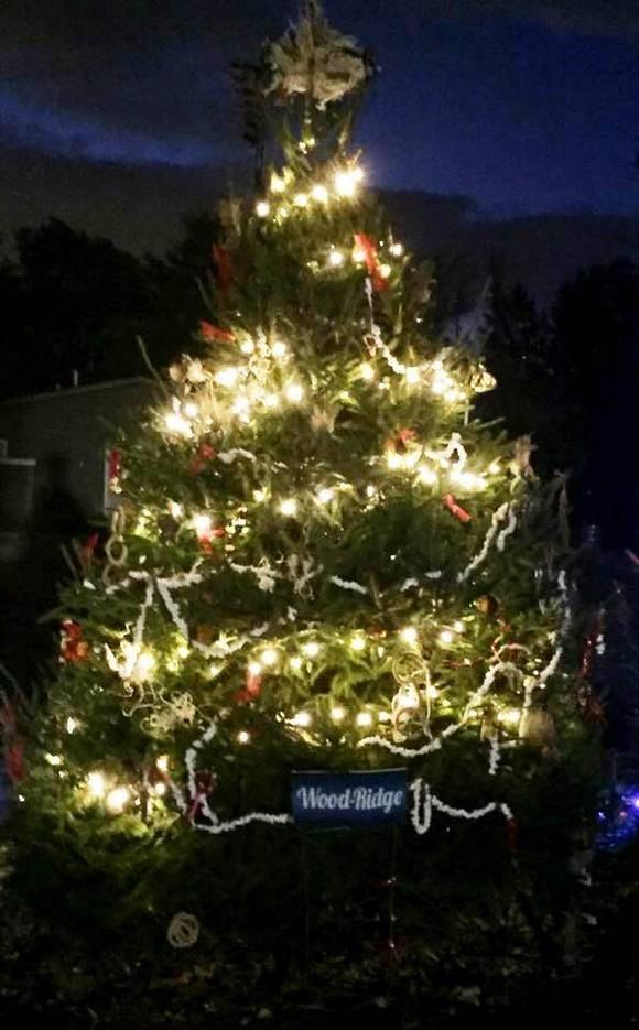 ca7bbcbde1aa2348fe89_EDIT_Wood_Ridge_Tree_at_Van_Suan.jpg