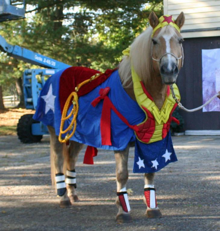 Photos: Team Velvet Equine Costume Show