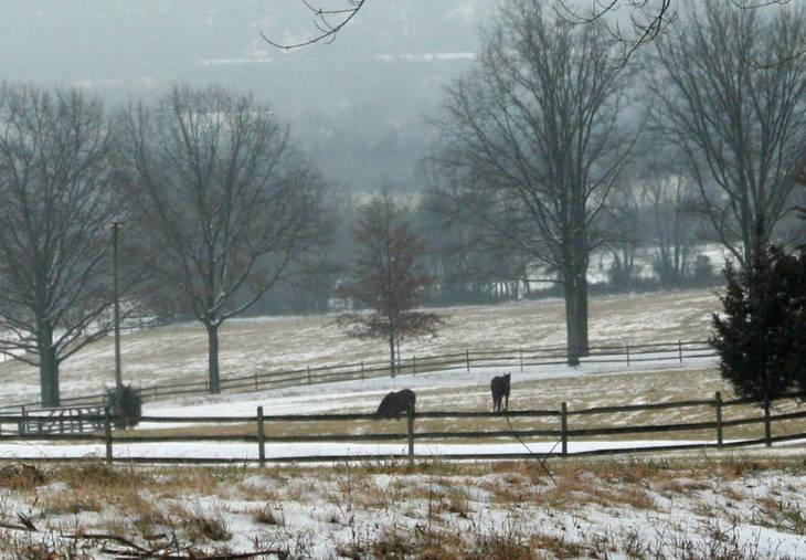 cfea977a907fc77d8b41_winter_horses.JPG