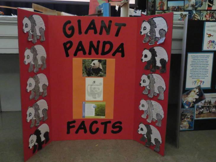 d410817a4e446c0e2e04_Giant_Panda.JPG