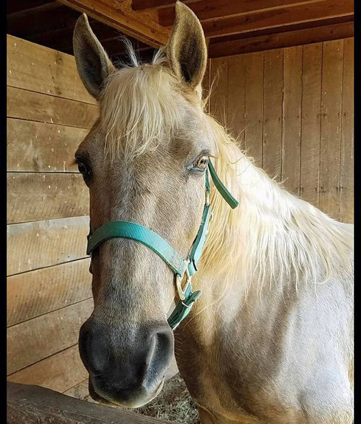 d5bb077d36e948f9f678_auction_horses002.JPG