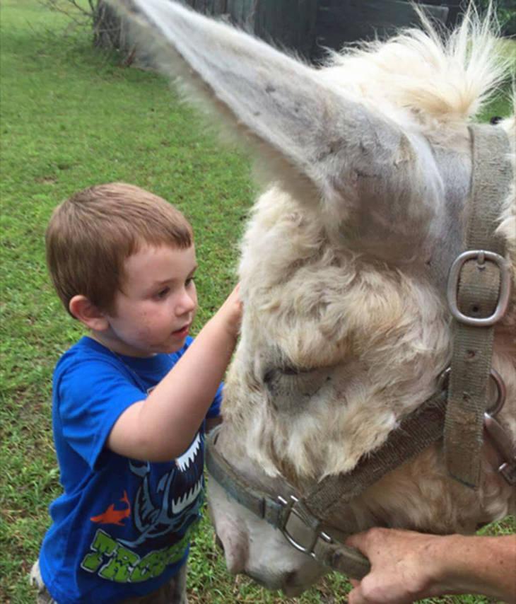 d757f4499146838b4f71_auction_horses014.JPG