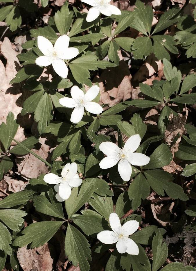 d89f4efc46422d29dffc_white_flower_patch.jpg