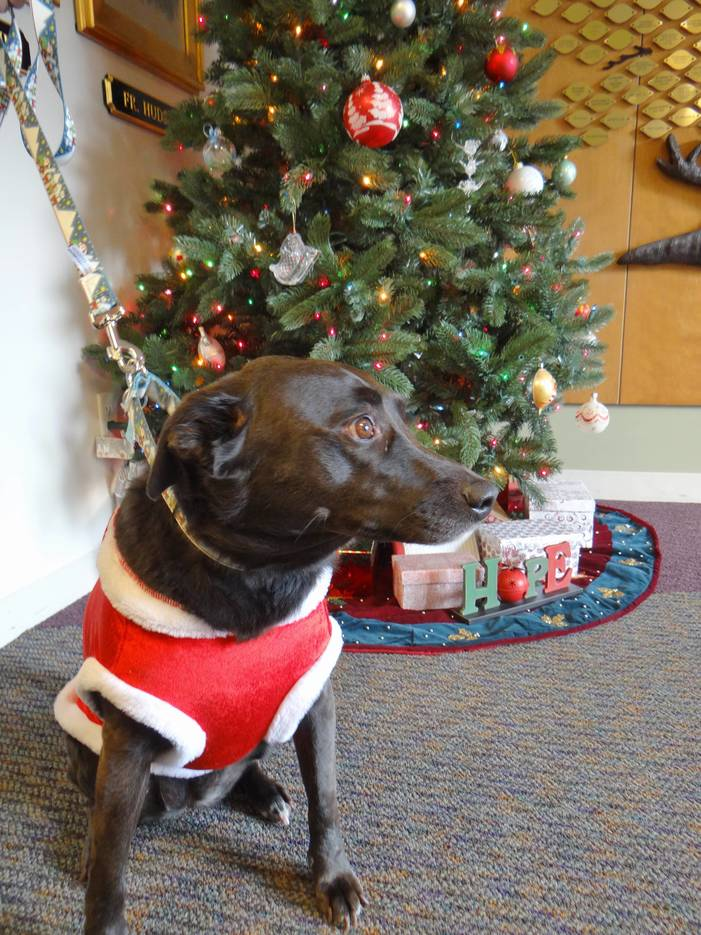 Canine Therapy Brings Comfort to Patients and Loved Ones at Center for Hope Hospice