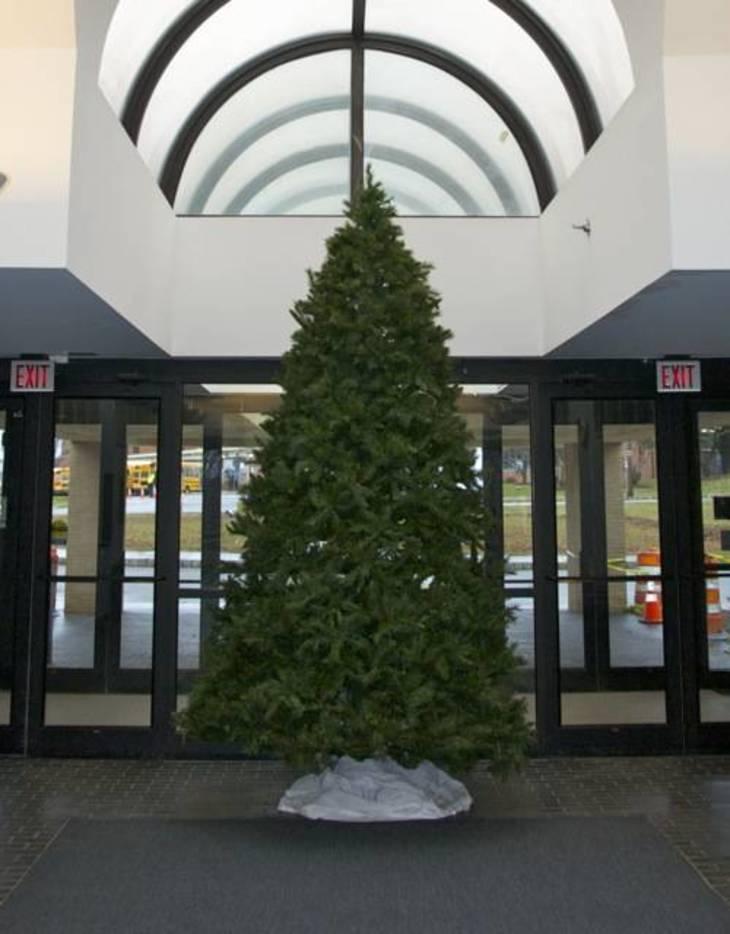 dc9f73ca80dace160ece_christmas_tree.jpg