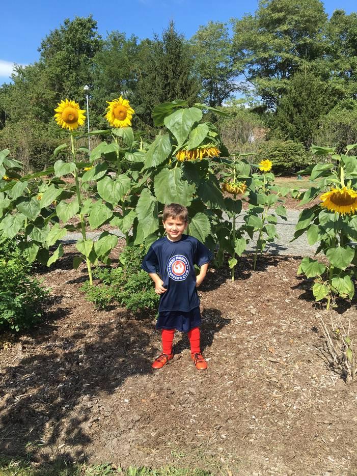 dce1922ffae9e9917ee5_Brayden_Sunflower.jpg