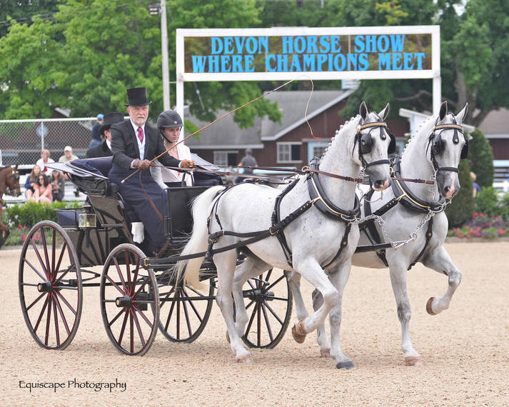 e18f30e413b0af17d37e_Devon_Horse_Show_Driving2.JPG