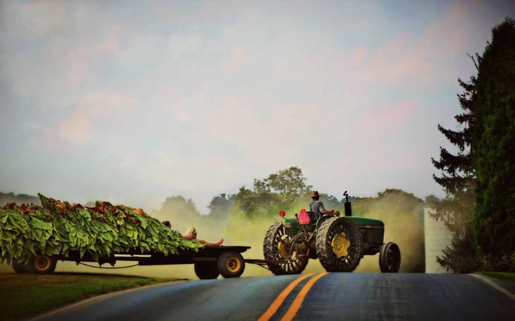 e1c4530ddec9d5c2bd8f_The_Tobacco_Farmers_Wife_Beth-Ferris-Sale_12x8_72ppi.jpg