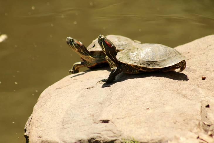 e3deb0ff2702a6c6f708_Turtles_-_Warinanco_Park___Micayla_.jpg