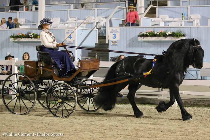 e5a831c61791aa9a60e4_Devon_Horse_Show_Driving0.JPG