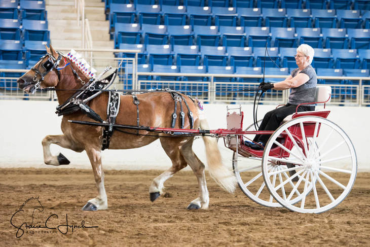 e8d1d6078248db62c7be_Keystone_International_Draft_Horses192.JPG