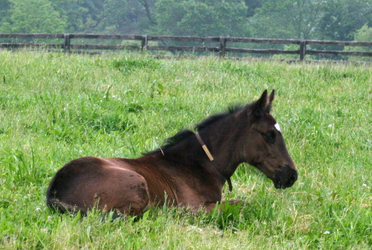 eb2efc4c15cbbce54fb8_foal_laying_down.JPG