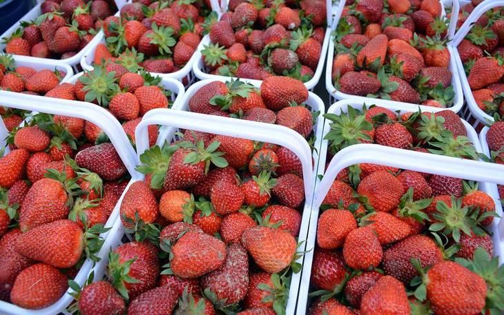 f14fa83a2d74a34c8b23_hillspixdukefarmsstrawberries.jpg