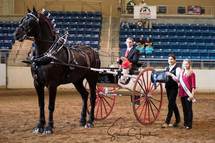 f1ea6663b3d54cdd7fa6_Keystone_International_Draft_Horses194.JPG