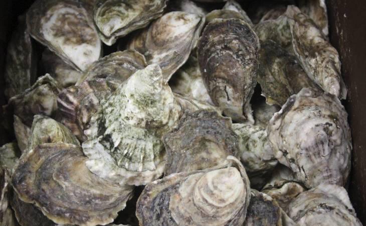 f33961b795aa2ca8dfa5_Cape_May_Salt_Oysters_3.JPG