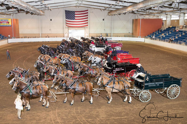 f686a4023dcf1604fe98_Keystone_International_Draft_Horses198.JPG