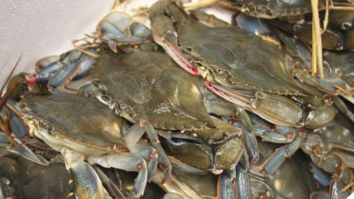 f752d40033f9e4ed61b7_Soft_Shell_Crabs.JPG