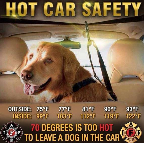 f9f4d8131623363cf971_0f4c7d1ccf39e4e1d2a3_hot_car_safety.jpg