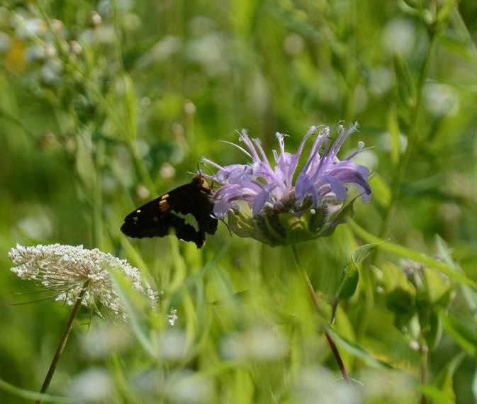 fa381df01fc8d7573f9e_Butterfly.JPG