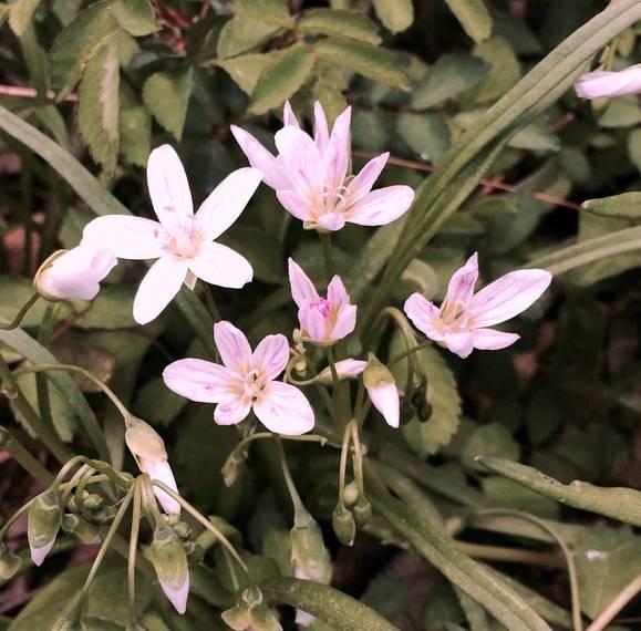 fcb7a6d77ae02a7183eb_pink_flowers.jpg