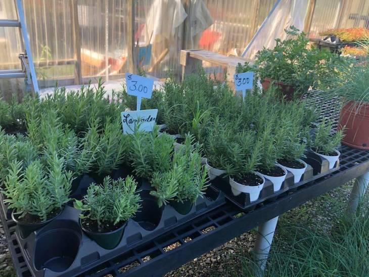 fd20e7173f7a1b1b6901_Fairfield_Farms_Herbs.jpg
