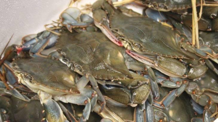 fd3fd5f57dbaa0fd87b5_Soft_Shell_Crabs.JPG