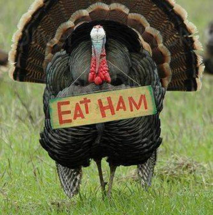 ffeb02aed9e7af15e918_691800383ff98fe3127d_eat-ham-turkey.jpg