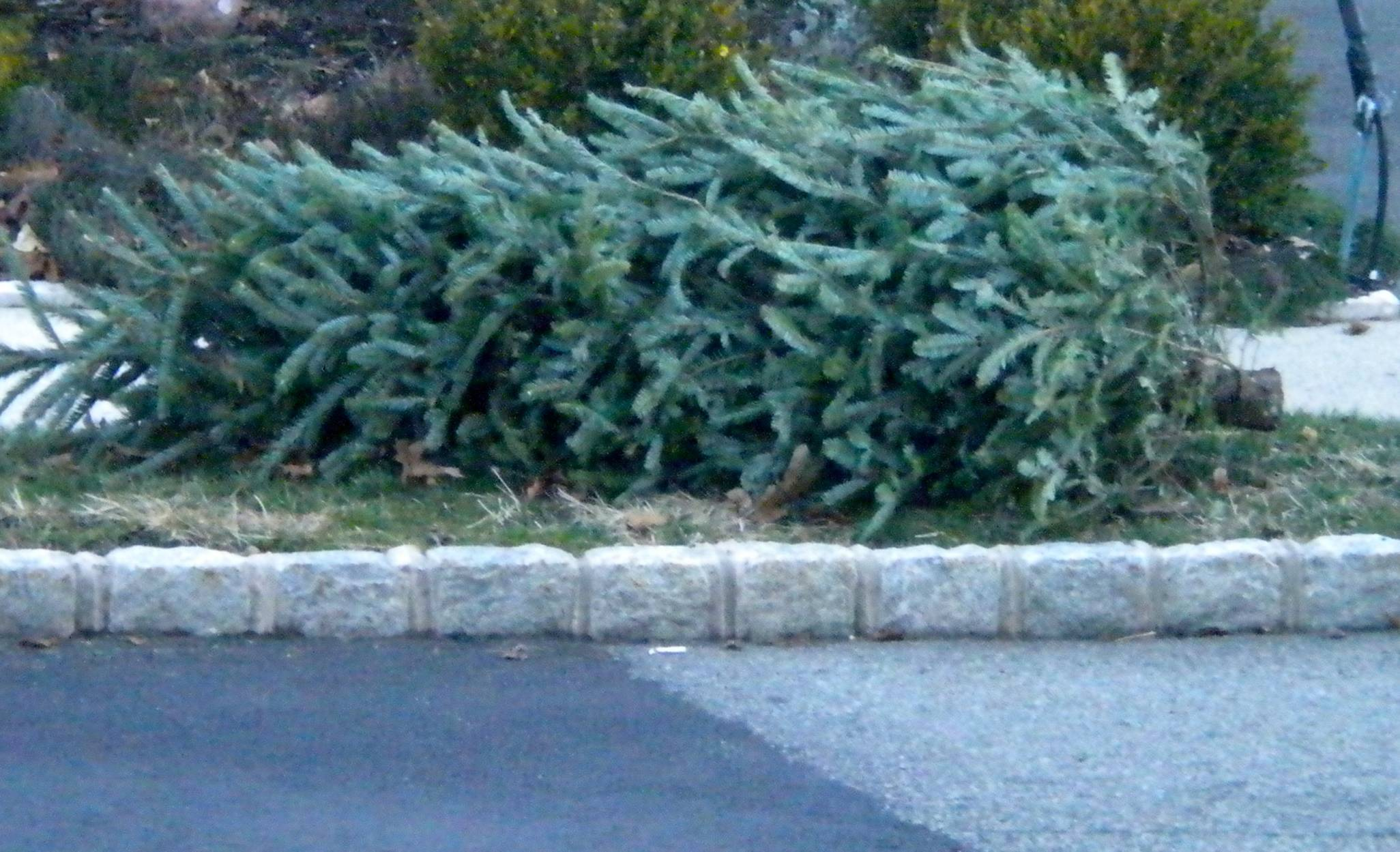 d1514b5fdc19d680e0c0_Christmas_tree_collection.JPG