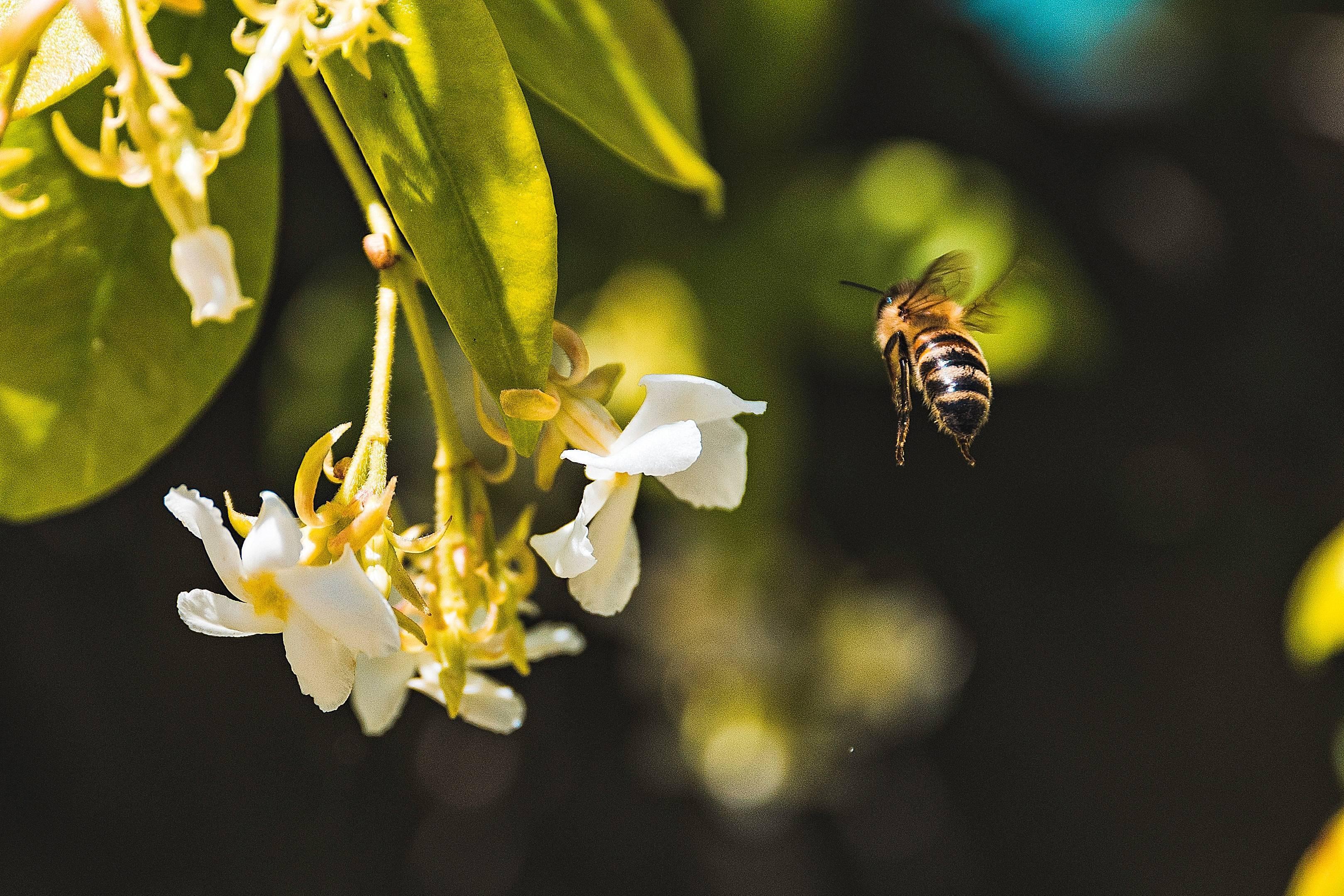 d406db26201bfffc222d_bees.jpg