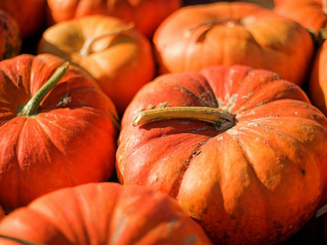 d6cb73e6c747969f592a_54eb9fb87aede_-_slobo-mitic-istock-pumpkins-lgn.jpg