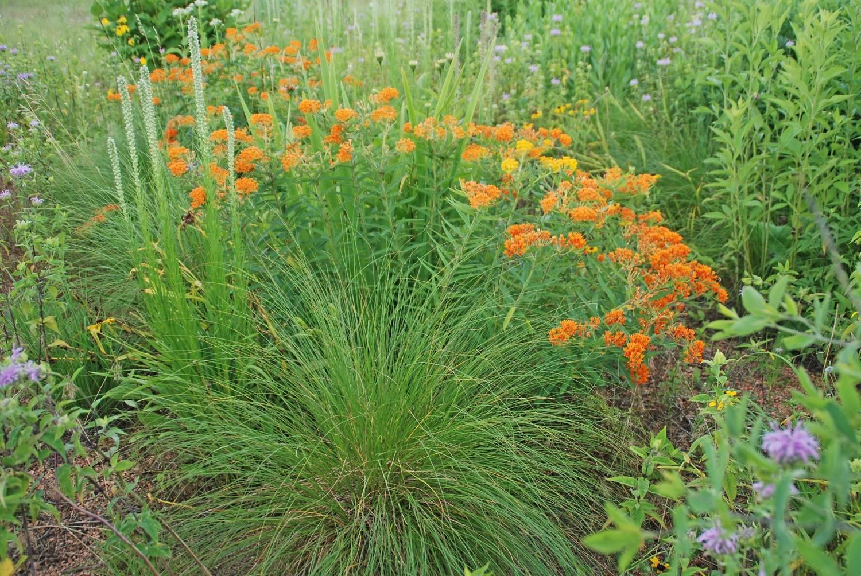 d75beec5259bec8d39a1_NATIVE_PLANTS_photo_credit_Melinda_Myers.jpg