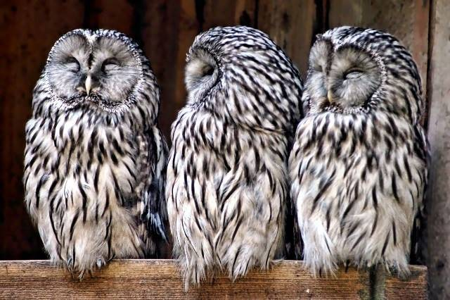 de0646028be055dbb08c_Owls.jpg