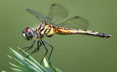de13bae2359bb55baf89_dragonfly.jpg