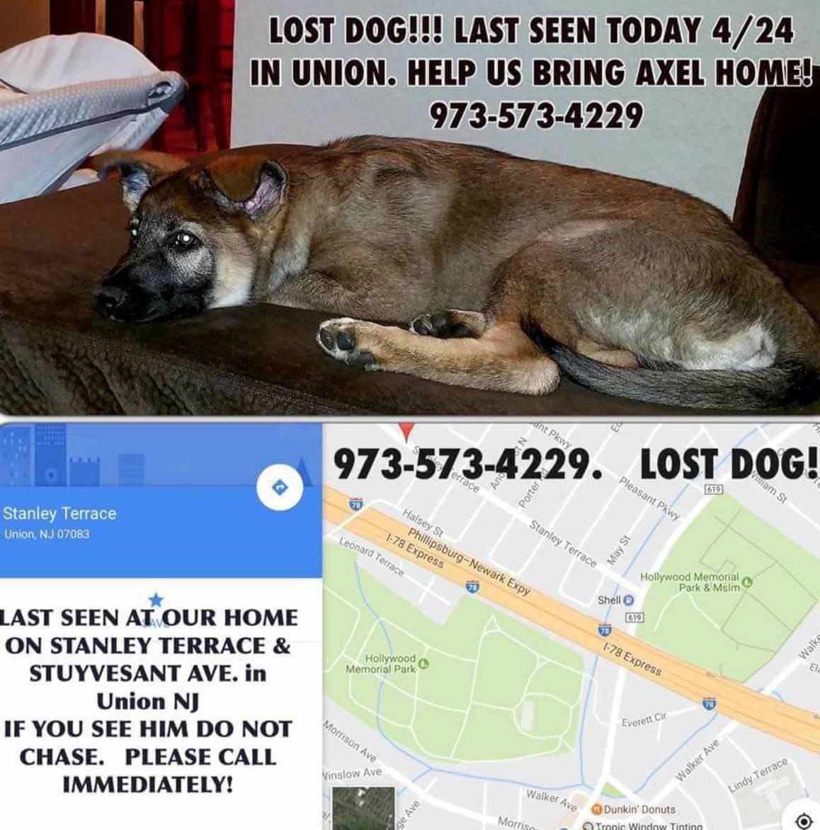 de2341041302370033f6_92c45dba537078262d1f_missing_dog_-_axel.jpg