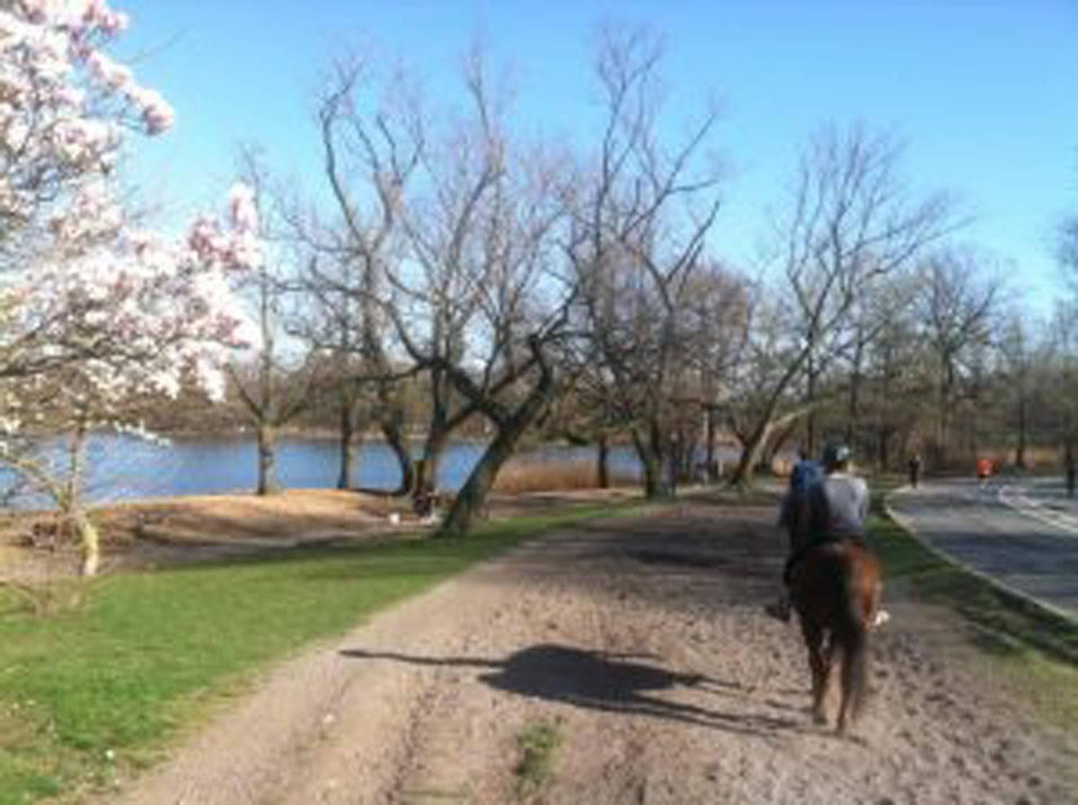 e680ce9a3901b3bbd511_Kensington_stablesSpring-trail-ride.JPG
