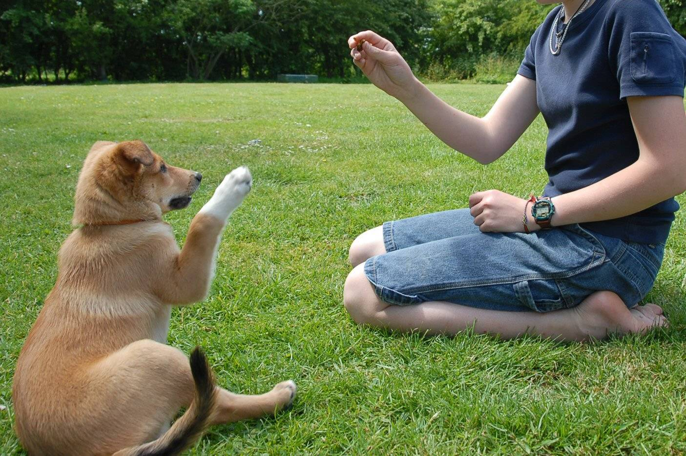 e8233f584b5b880ef946_Dog-Training-How-to-Train-Your-Dog-to-Sit1440856.jpg