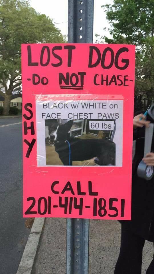 f00db47e68bf3a8191e3_Dog_Lost_May_5_2017.jpg