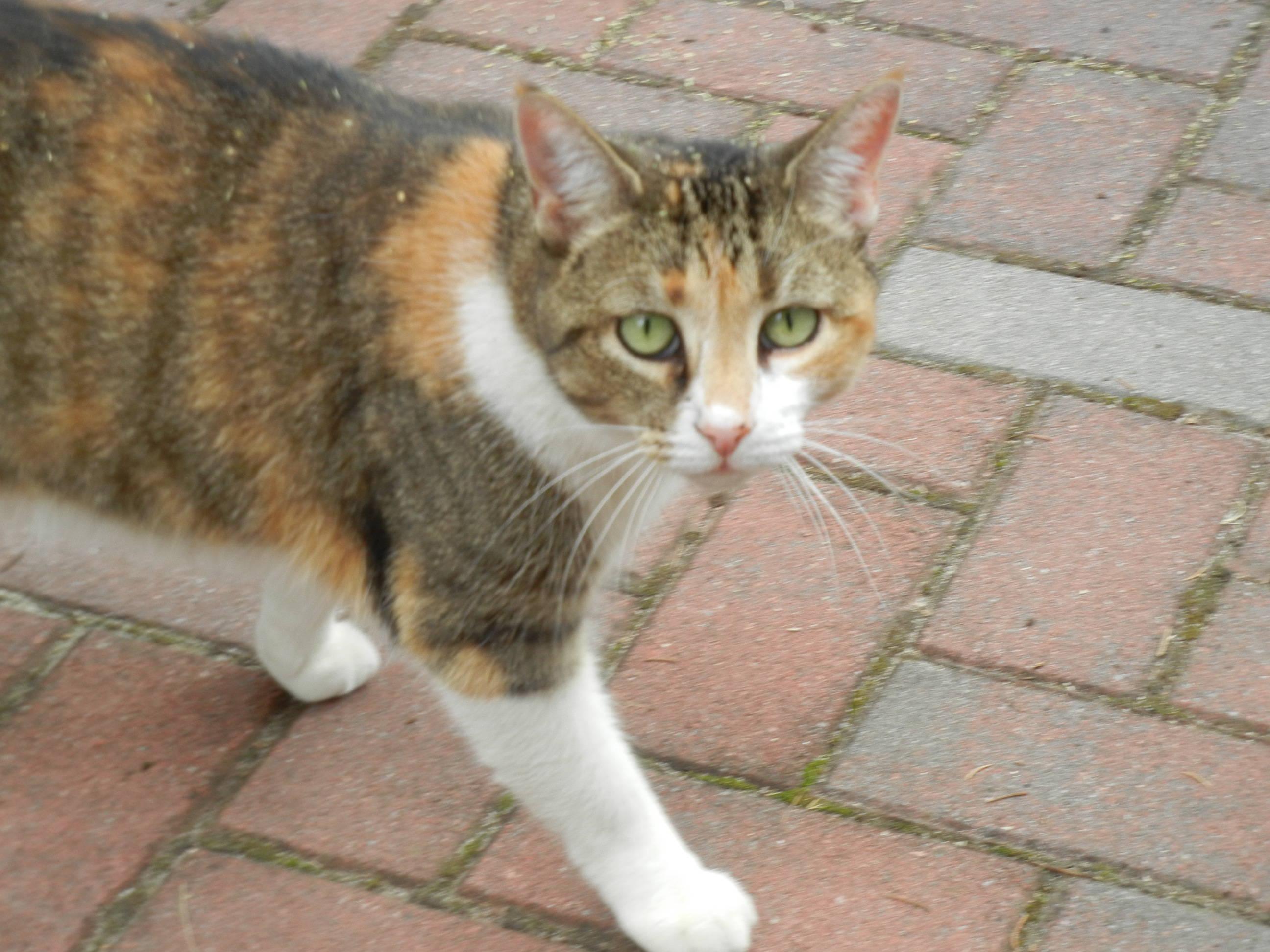 Montville Animal Shelter Announces Wish List Montville