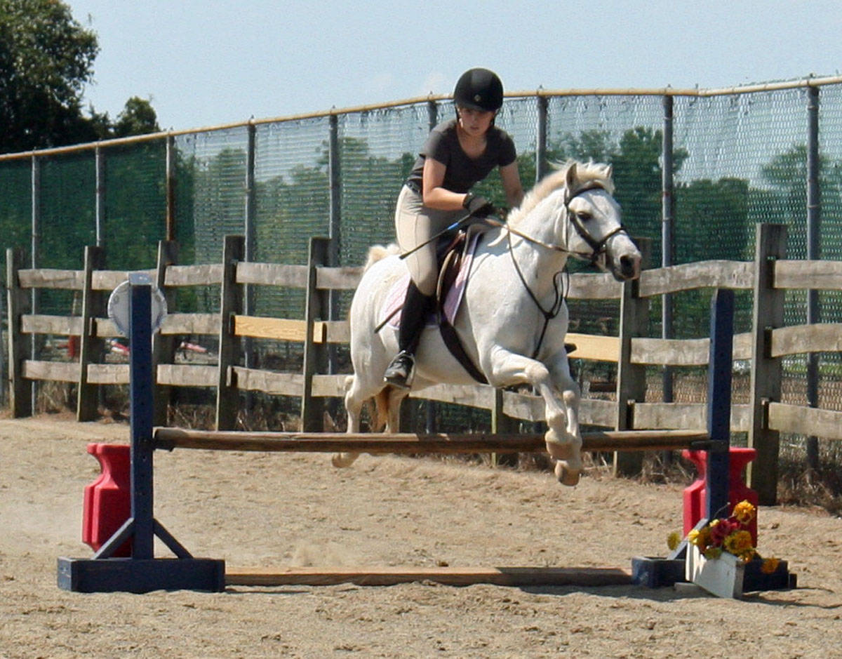 f473c743a4587d4a0d92_senior_horse.JPG