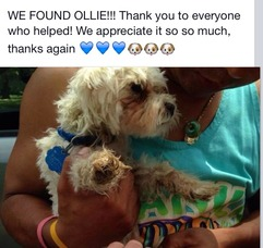Ollie Has Been Found, photo 1