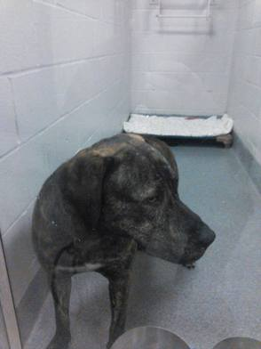 Dog Found in Westfield's Tamaques Park Jan. 25, photo 1